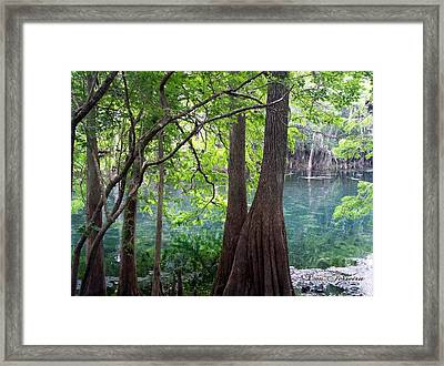 Florida Springs Framed Print