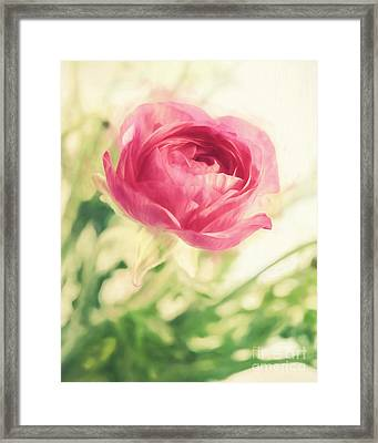 Flower Framed Print by HD Connelly