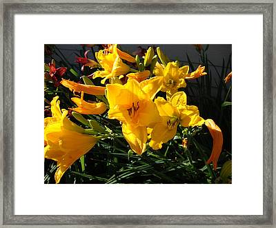 Flower In Idaho Falls Framed Print by Iam Wayne