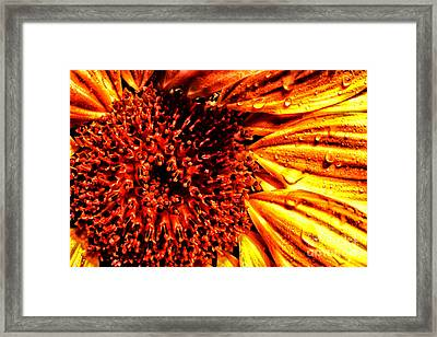 Flower Petals And Dewdrops Framed Print by Thomas R Fletcher