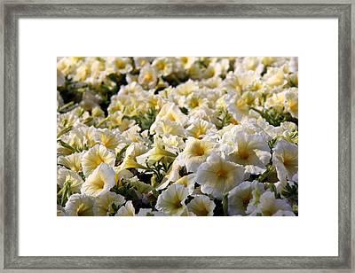 Flower Framed Print by Sanjeewa Marasinghe
