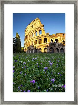 Flowers At The Coliseum Framed Print