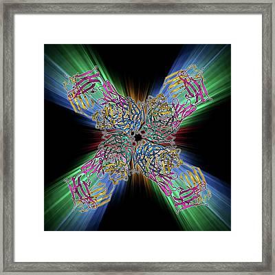 Flu Virus Surface Protein And Antibody Framed Print by Laguna Design