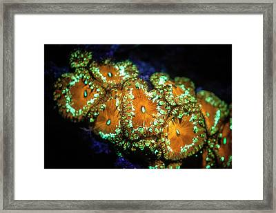 Fluorescent Coral Framed Print by Ethan Daniels
