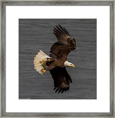 Fly By  Framed Print by Glenn Lawrence