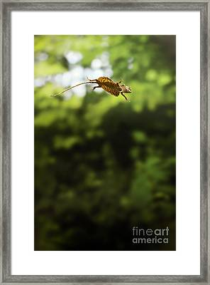 Flying Dragon In Flight Framed Print