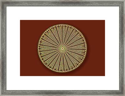Fossil Diatom Framed Print by Frank Fox