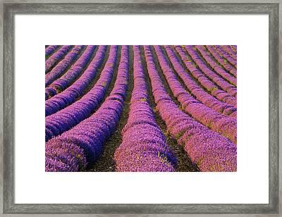 France, Provence Region Framed Print by Jaynes Gallery