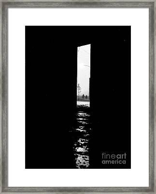 Freedom Framed Print by Steven Macanka