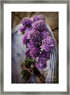 Fresh Chives Flower Framed Print by Mythja  Photography
