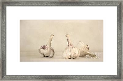 Fresh Garlic Framed Print by Priska Wettstein