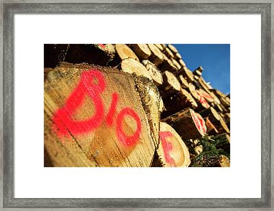 Freshly Cut Timber Framed Print by Ashley Cooper