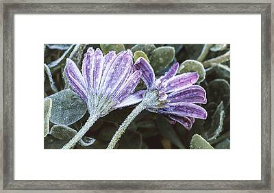 Frosted Flowers Framed Print by Caitlyn  Grasso