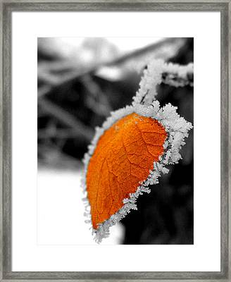 Frosty Framed Print by Chad Rice