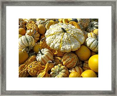 Frucht, Fruechte, Herbst, Kuerbis Framed Print by Tips Images