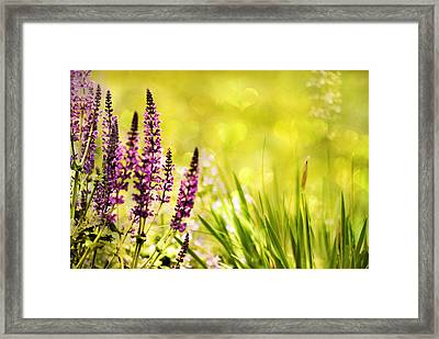 Garden Delight Framed Print by Jessica Jenney