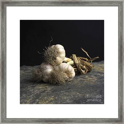 Garlic Framed Print by Bernard Jaubert