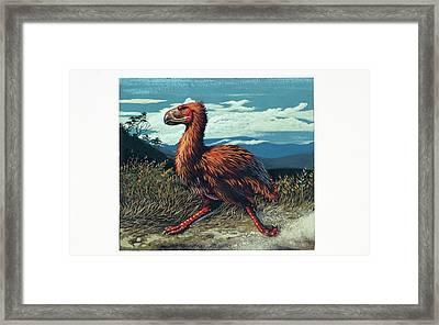 Gaston's Bird Framed Print by Deagostini/uig