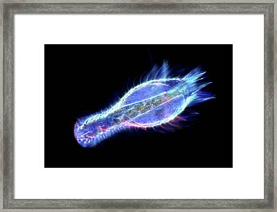 Gastrotrich Framed Print