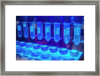 Genetic Analysis Framed Print