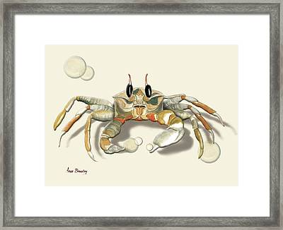 Ghost Crab Framed Print by Anne Beverley-Stamps