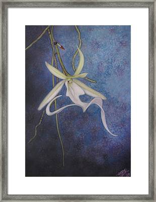 Ghost Orchid II Framed Print