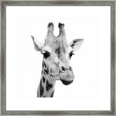 Giraffe On White Background  Framed Print