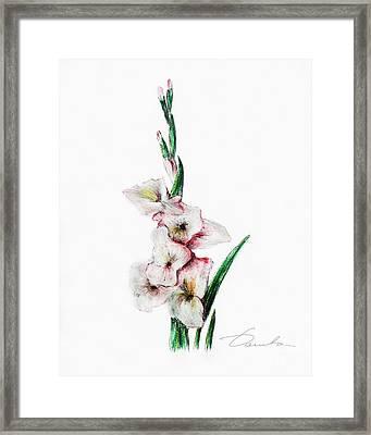 Gladiolus Framed Print by Danuta Bennett