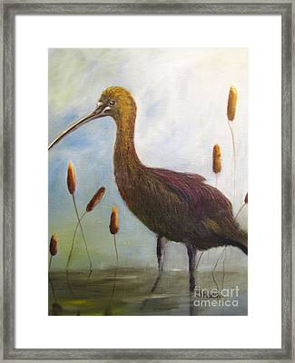 Glossy Ibis Framed Print by Sharon Burger