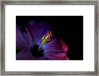 Glow Framed Print by Steve Godleski