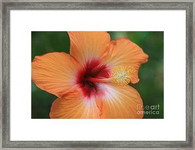 Gods Garden Framed Print