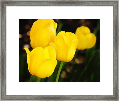 Golden Cups Framed Print