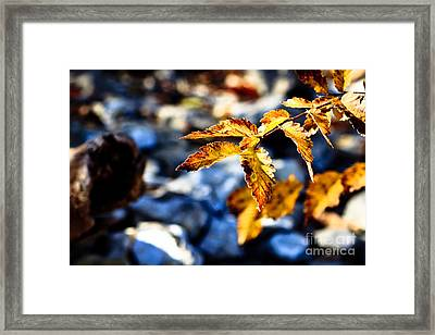 Framed Print featuring the photograph Golden Leaves by Lawrence Burry