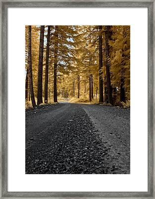 Golden Pines Framed Print