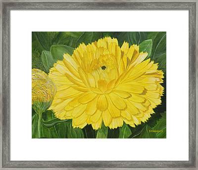 Golden Punch Framed Print