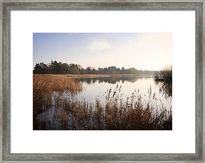 Golden Reeds Framed Print by Shirley Mitchell