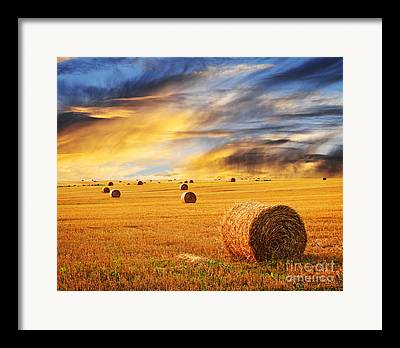 Hayrolls Framed Prints