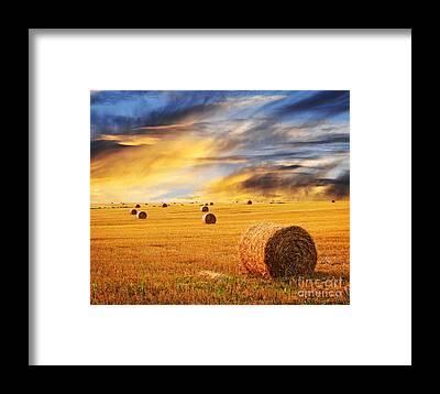 Autumn Field Framed Prints
