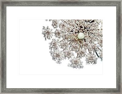 Goldenrod Crab Spider Framed Print