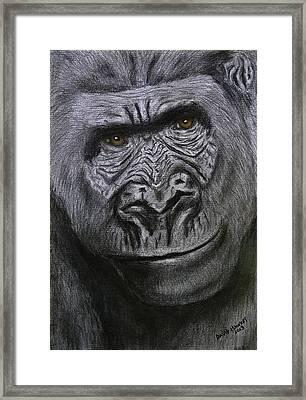 Gorilla Portrait Framed Print by David Hawkes