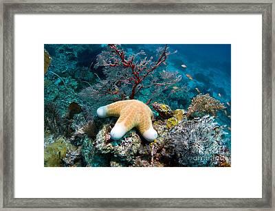 Granulated Seastar Framed Print by Georgette Douwma
