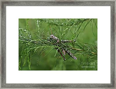 Framed Print featuring the photograph Grasshopper by Olga Hamilton
