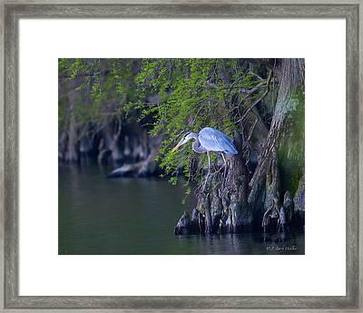 Great Blue Heron Fishing Framed Print