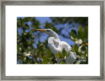 Great Egret 02 Framed Print