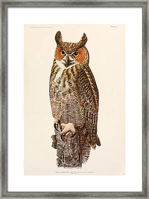 Great Horned Owl Framed Print by Dreyer Wildlife Print Collections
