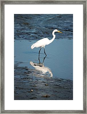 Great White Egret And Reflection Framed Print by Suzanne Gaff