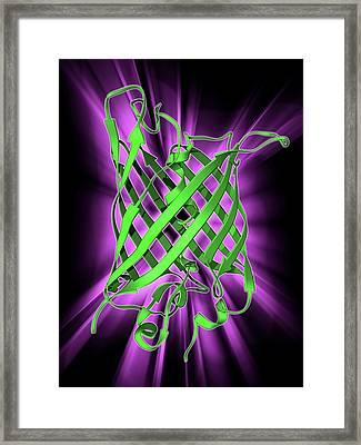 Green Fluorescent Protein Molecule Framed Print by Laguna Design