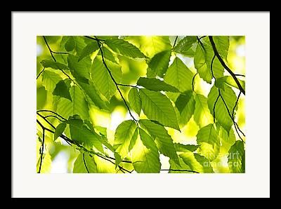 Elm Photographs Framed Prints