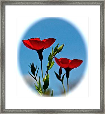 Flower 6 Framed Print