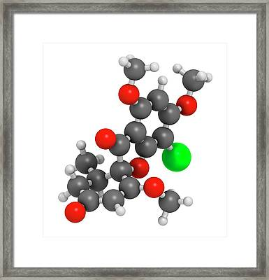 Griseofulvin Antimycotic Drug Molecule Framed Print by Molekuul